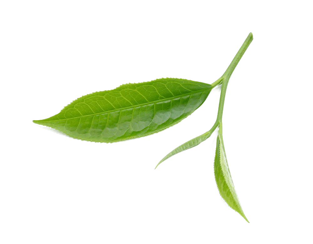 kisspng tea leaf download fresh tea leaves 5a9c8670b236f5.14503115152020747273