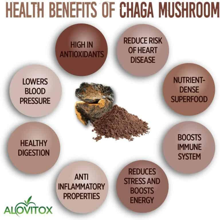 Chaga Mushroom Powder Benefits