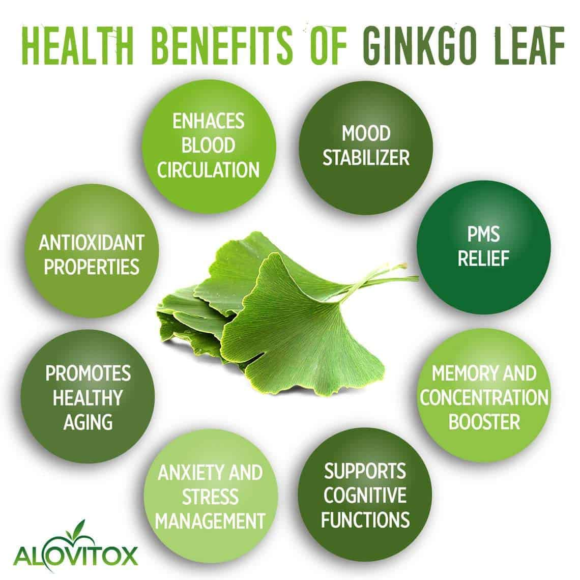Organic Ginkgo Leaf Powder - 16oz